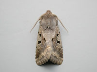 2190 Hebrew Character